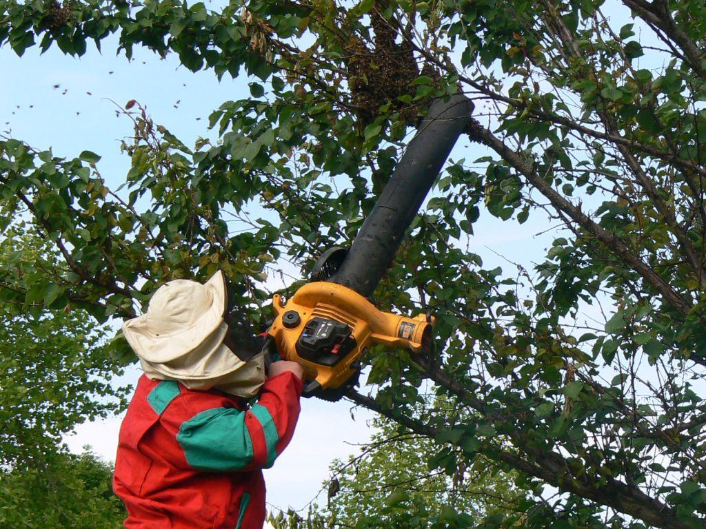 Deratizace strom